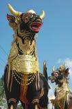 Taureaux pour la cérémonie religieuse Images libres de droits