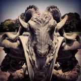 Taurus στοκ φωτογραφία με δικαίωμα ελεύθερης χρήσης