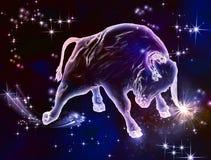 Taurus Bull Royalty-vrije Stock Foto's