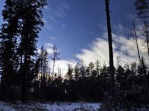 Pleiades open star cluster on night sky and clouds over winter forest stock photography
