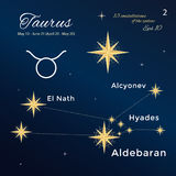 Taurus. 13 constellations of the zodiac with titles and proper names for stars. Vintage style. Taurus. High detailed vector illustration. 13 constellations of Stock Images