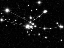 Taurus Zodiac Royalty Free Stock Image