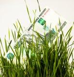 Tausend Rubel ein Einkommensweißhintergrund des grünen Grases wachsender Lizenzfreies Stockbild