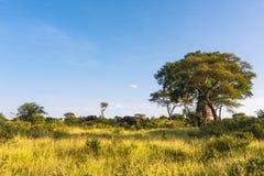 Tausendjähriger Baobab und eine Herde von Elefanten Tarangire, Afrika Lizenzfreie Stockbilder