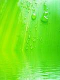 Tautropfen auf Bambusurlaub Lizenzfreie Stockfotografie