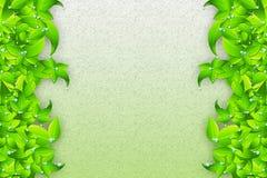 Tautropfen auf Blättern Stockfotos