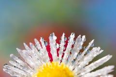 Tautropfen auf Blumenblumenblättern Stockfoto