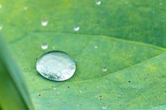 Tautropfen auf dem Blatt von Lotus Asia Lizenzfreies Stockbild