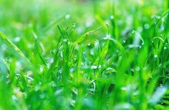 Tautropfen auf dem Gras Lizenzfreies Stockbild