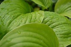 Tautropfen auf den Blättern Stockbild