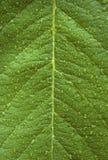 Tautropfen auf einem grünen Blatt Stockfotos