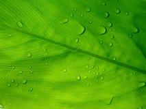 Tautropfen auf grünem Blatt Lizenzfreie Stockfotos