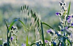 Tautropfen auf Gras Stockbild
