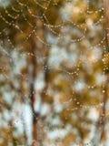 Tautropfen auf Spinnenweb-Frühlingsmorgen stockbild