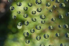 Tautropfen der grünen Stimmung Stockbild
