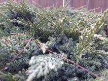 Tautropfen des Grüns erhalten nah! Stockfotografie