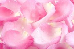 Tautropfenblumenblätter Lizenzfreie Stockbilder