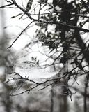 Tautropfennetz stockfotografie