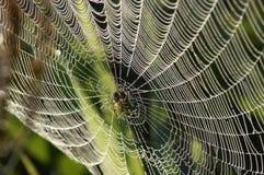 Tautropfennetz Stockfoto