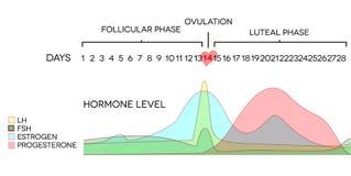 taux hormonal Photo libre de droits