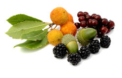 Tavern wild fruits. Tavern with variety of wild fruits found in the autumnal forest Royalty Free Stock Images