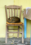 Taverna cat. A sleek Greek taverna cat relaxes on a typical Greek cafe chair stock image
