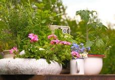 Tavola della pianta nel giardino Fotografie Stock Libere da Diritti