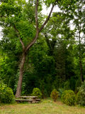 Tavola di legno sotto un albero nella foresta Immagine Stock