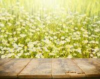 Tavola di legno vuota per esposizione, sfondo naturale con le margherite Fotografia Stock Libera da Diritti