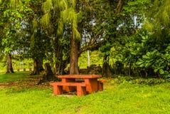 Tavola di picnic concreta sotto un grande albero Fotografia Stock