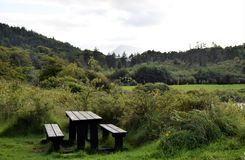 Tavola di picnic in Forest Park fotografia stock libera da diritti