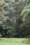 Tavola di picnic in foresta nebbiosa verde fertile Immagine Stock