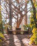 Tavola di picnic in mezzo ad una foresta Fotografia Stock