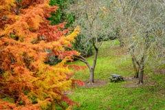 Tavola di picnic nel parco di autunno Immagine Stock