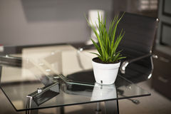 Tavola di vetro in ufficio, nel vaso della tavola ed in sedia moderni Fotografie Stock Libere da Diritti