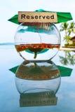 Tavola riservata, girasole arancio in una tazza di vetro, riflessione, fondo degli alberi della spiaggia Immagine Stock
