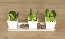 tavola vivente della decorazione con la foglia verde Immagine Stock