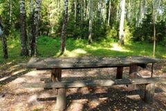Tavola vuota con i banchi in una foresta della betulla Immagini Stock Libere da Diritti