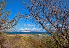 Tavolara-Insel Stockfoto