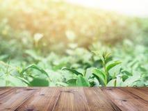 Tavolo della presidenza di legno sopra il campo del tè verde Immagini Stock
