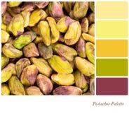 Tavolozza del pistacchio Fotografie Stock