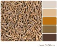 Tavolozza del seme di cumino Fotografia Stock Libera da Diritti