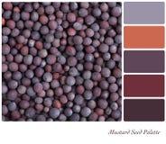 Tavolozza del seme di senape Fotografia Stock Libera da Diritti