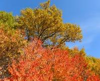 Tavolozza di autunno Fotografia Stock