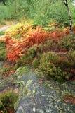 Tavolozza di colori di autunno Immagine Stock Libera da Diritti