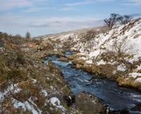 Taw Marsh Belstone Dartmoor. The river Taw flowing through Dartmoor in winter Royalty Free Stock Images