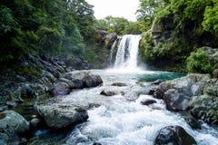 Tawhai秋天的风景看法在汤加里罗国立公园,新西兰 免版税库存照片