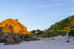 Tawharanui regionalności park Obraz Royalty Free