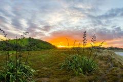 Tawharanui regionalności park Fotografia Royalty Free