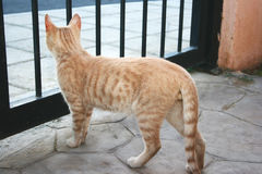 tawny кота Стоковое фото RF